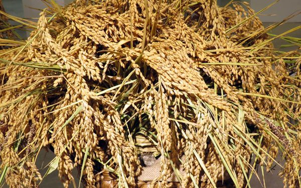 Valencian Rice – Arroz de Valencia